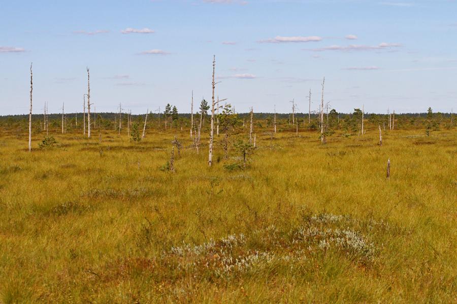 Levanevan maisemaa pitkospuilta kuvattuna. Kuva: Jouni Kannonlahti