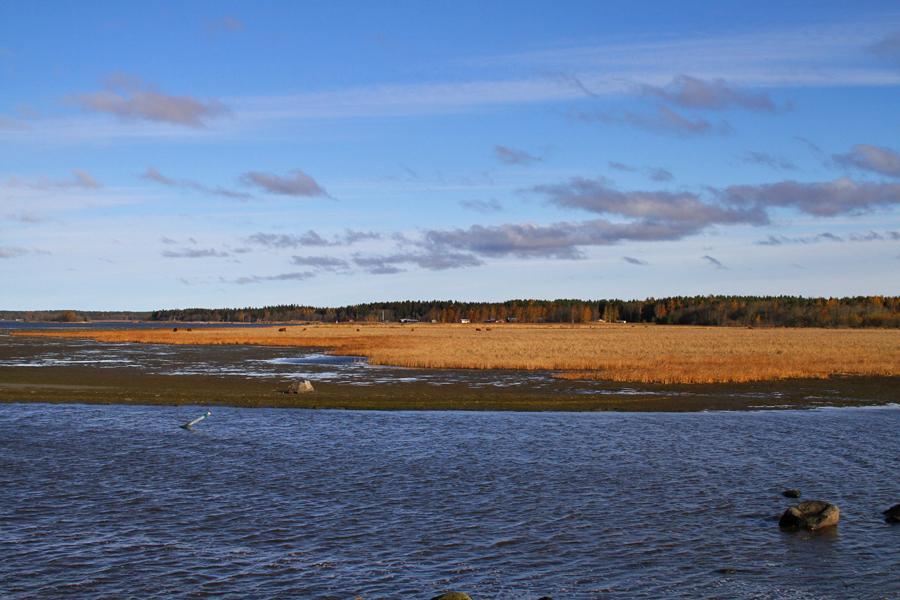 Harrströmin eteläisemmästä kalasatamasta näkymää pohjoiseen. Kuva: Jouni Kannonlahti